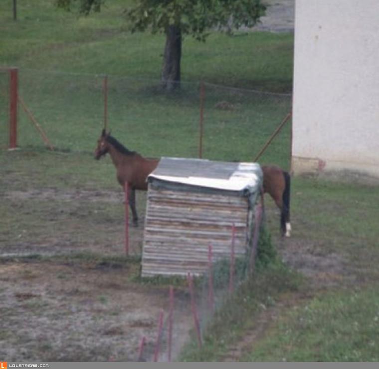 Loooooooong Horse....