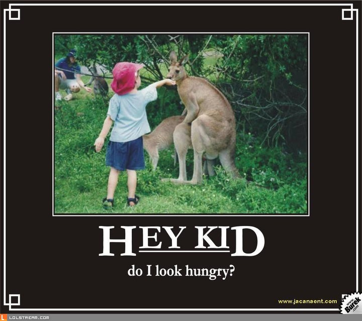 Don't bother the kangaroo