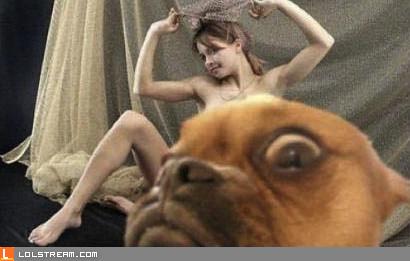 Damn Dog...