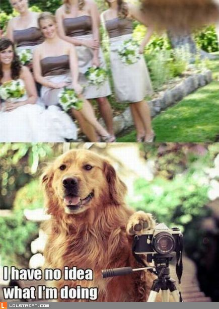 Canine Photographer