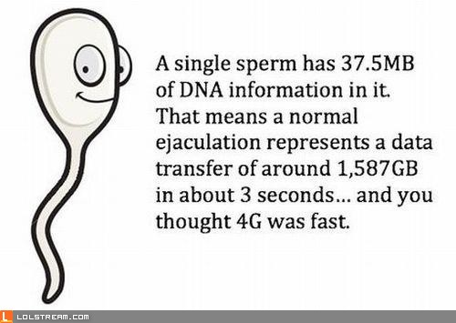 Sperm Data