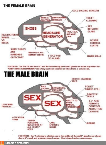 Male + Female Brain