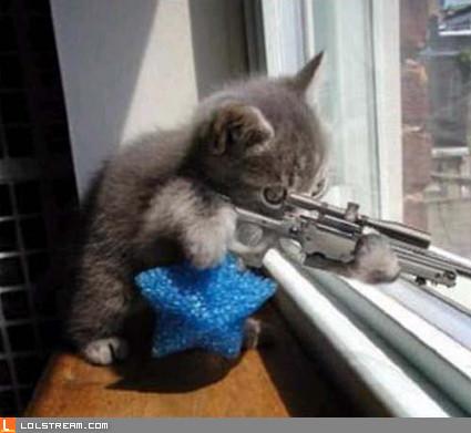 Hitman cat
