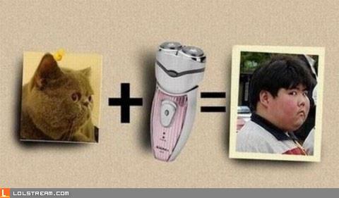 Cat + Electric Razor = ...