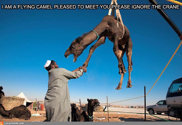 I'm a flying camel