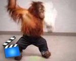 Super chill monkey does Hollywood