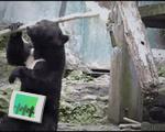 Bear Jedi Skills