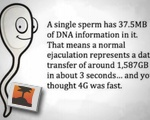 Sperm Data