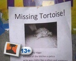 Missing Tortoise!