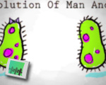 The evolution of man and woman