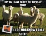 Sheepostor