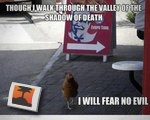 Fearless Chicken