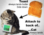 Toasted Cat
