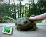 Happy toad is happy