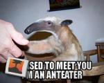 Ant-Eater