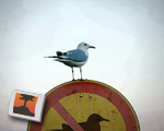 Trouble-making bird