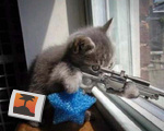 Hitman cat