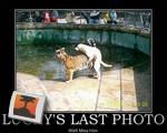 Lucky's Last Photo