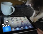 Cat investigates an ipad