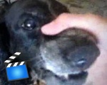 Beatboxing Dog