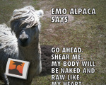 Emo Alpaca