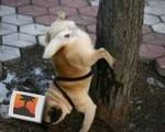 Handstand Pee Dog